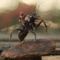 Человек-муравей. Новая миссия