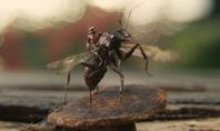 Человек-муравей снова в деле!