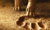 «Король Лев» в кино